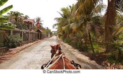 POV Ridding horse Mekong Delta Vietnam - POV Ridding horse...