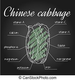 vector illustration of nutrients list for chinese cabbage on...