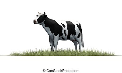 cow - isolated on white background