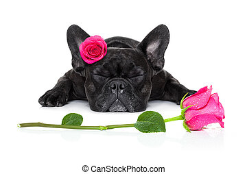 valentines love sick dog - french bulldog dog sleeping with...