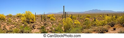 Desert Mountains Panorama - Four peaks desert mountains...