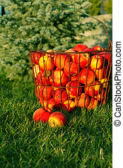 Ripe red apples on the green grass
