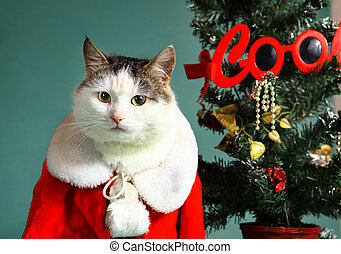 cool tom cat in santa claus garment mantel with white fur...