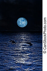 Three dolpins - Dolphins jumping in the moonlight at the...