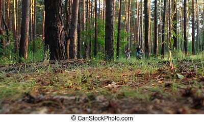 Lovers ride bikes in the forest Guy and a girl ride a...