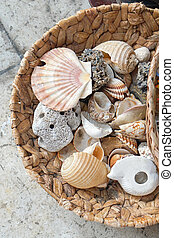 Shells - Empty sea shells and snails in basket
