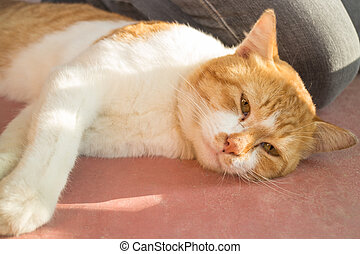 Adorable cat lie down leisure, stock photo