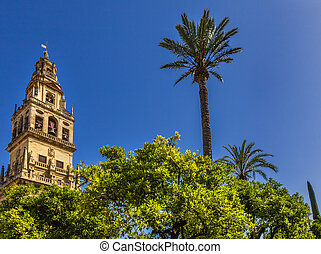 Torre del Aliminar Tower Spire Palm Tree Mezquita Cordoba Spain