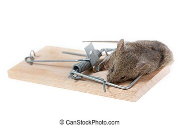 Mouse in a mousetrap - The mouse in a mousetrap it is...