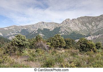 śródziemnomorski, las,  Barranca,  la