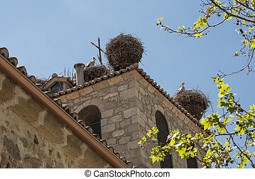 Colony of White stork, Ciconia ciconia on its nest Photo...
