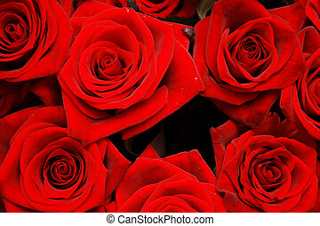 roses - On a photo Red roses background