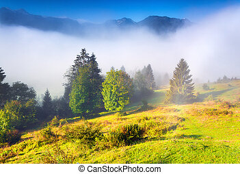 Foggy summer morning in the Triglav national park, near the...