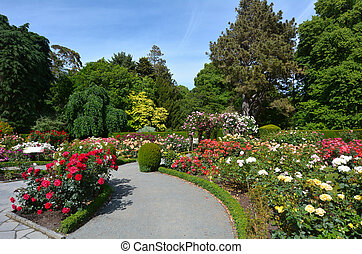 The Heritage Rose Garden in Christchurch Botanic Gardens,...