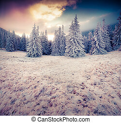 Dramatic winter scene in the mountain forest. First frost...