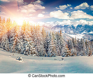 Colorful winter sunrise in the mountain forest. Retro style.