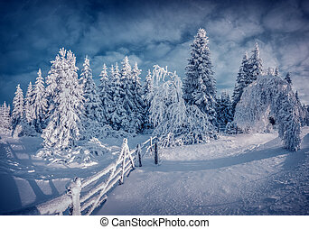 Night winter scene in the mountain forest after heavy snowfall
