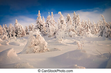 Trees covered with hoarfrost and snow in suny mountains