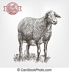 sheep breeding sketch - sheep breeding sketch made by hand...