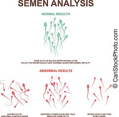 normal and abnormal sperm - Spermogram and semen parameters,...