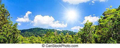 tropische, dschungel, Sonnenlicht, blank