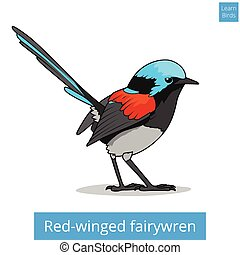 Red winged fairywren bird educational game vector - Red...