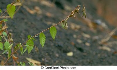 branch elm leaves against black earth - branch elm leaves...