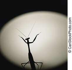 Maestro - praying mantis silhouetted in shape of musical...
