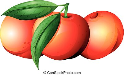 Fresh nectarines with leaves illustration