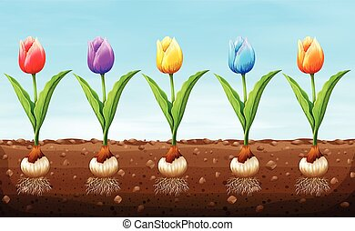 Different color tulip on the ground illustration