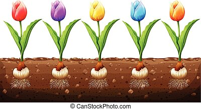 Tulips in different colors illustration
