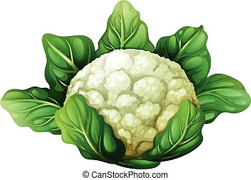 Cauliflower with green leaves illustration