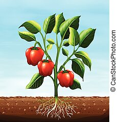 Red capsicum on the tree illustration
