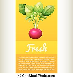 Poster design with fresh red radish