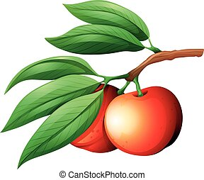 Fresg nectarine on the branch illustration