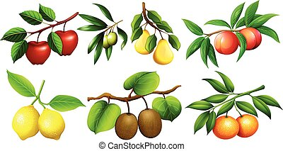 Different kind of fruits on branches illustration