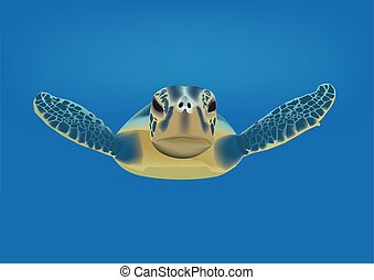 Sea Turtle - amphibious marine animal swimming sea turtle
