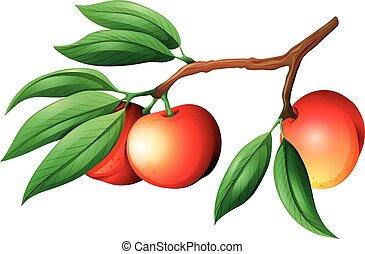 Fresh nectarine on the branch illustration