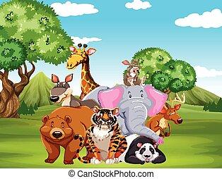 Wild animals on the field