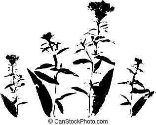 Ink drawing wild flowers - Drawing silhouette wild flowers...