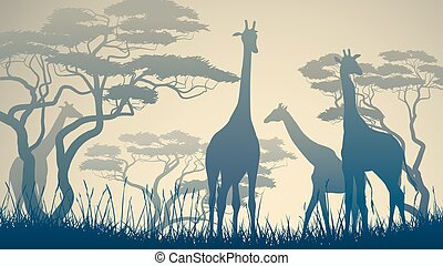 Wild giraffes in African savanna - Horizontal vector...