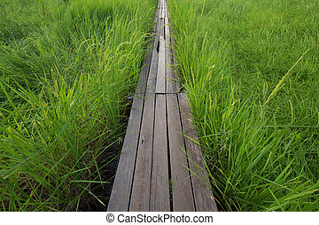 100 year-old wooden bridge between rice field at Nakhon Ratchasima, Thailand