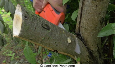 Electric power saw cutting off tree brunch - Close-up shot...