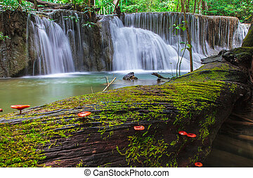 Waterfall in Deep Forest - Deep Forest Waterfall in tropical...