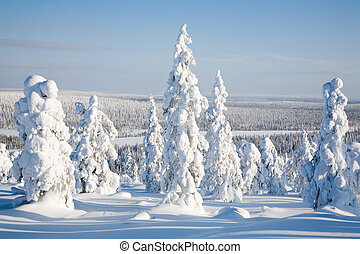 Lapland Finland - Beautiful winter landscape with snowy...