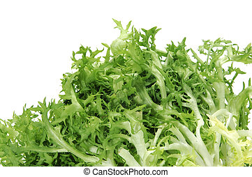 escarole endive - closeup of an escarole endive isolated on...