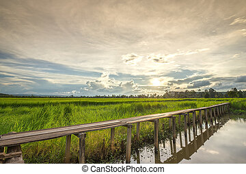 100 year-old wooden bridge between rice field with sunlight