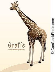 Realistic giraffe illustration standing with shadow