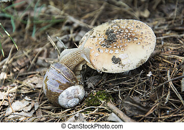 Snail crawling on a toadstool - In the summer in the forest...