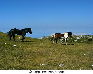 Horses - Two horses in mountains of National Park Sjeverni...